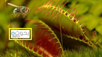 النباتات المفترسة