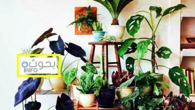 بحث حول نباتات الزينة