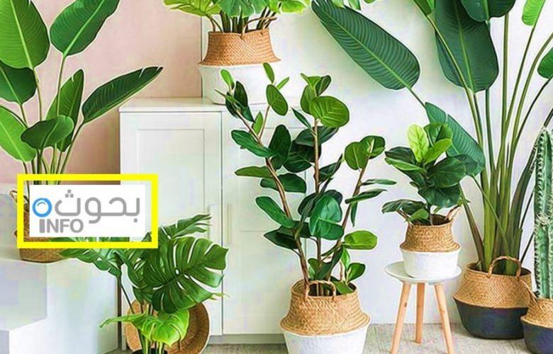 نباتات صناعية للزينة