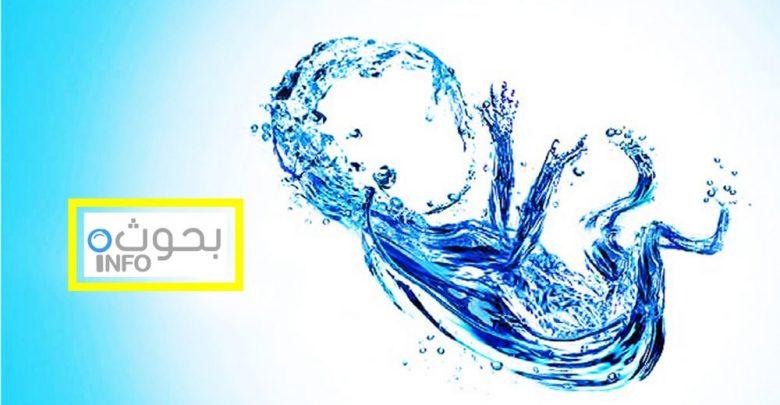 بحث حول أهمية الماء للكائنات الحية بحوث