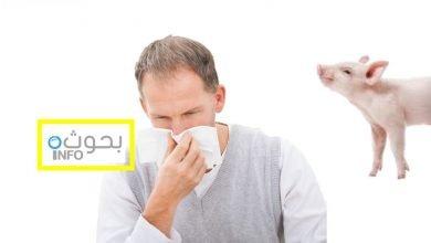 بحث حول انفلونزا الخنازير