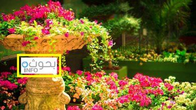 بحث حول نباتات الزينة الخارجية