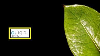 نباتات الظل